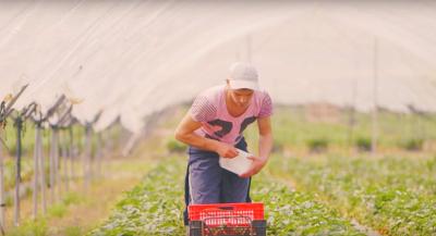 Quand une marque de jus de fruits aide les agriculteurs à économiser l'eau