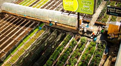 Des fermes urbaines au service des plus démunis